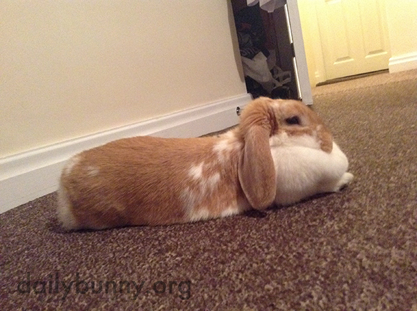 Bunny's Dewlap Makes a Pretty Good Head Cushion