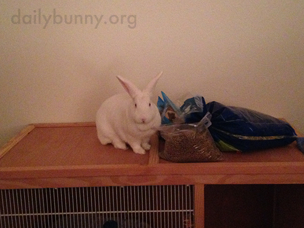 Bunny's Found the Food Stash!
