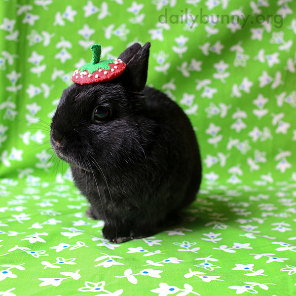 It's the Daily Bunny's Halloween 2015 Mega-Post! 1