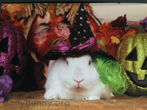 It's the Daily Bunny's Halloween 2015 Mega-Post! 2