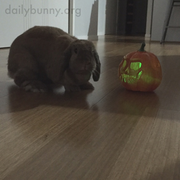 It's the Daily Bunny's Halloween 2015 Mega-Post! 4