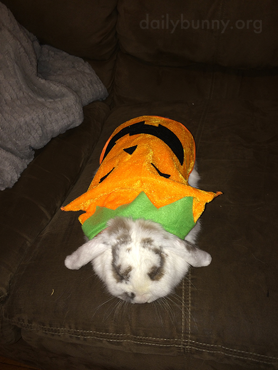 It's the Daily Bunny's Halloween 2015 Mega-Post! 5