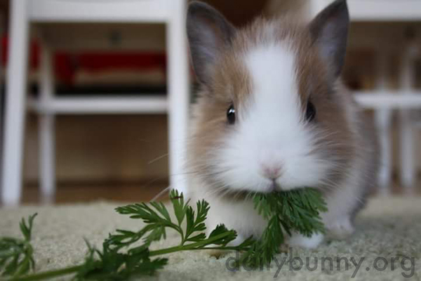 Tiny Bunny Enjoys a Snack of Some Nice Greens 2