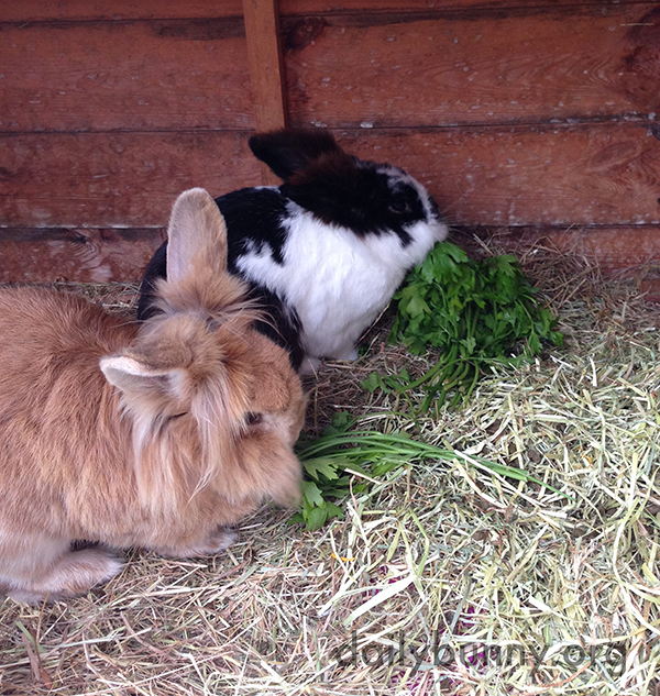 Bunnies Enjoy a Delicious Green Snack Together