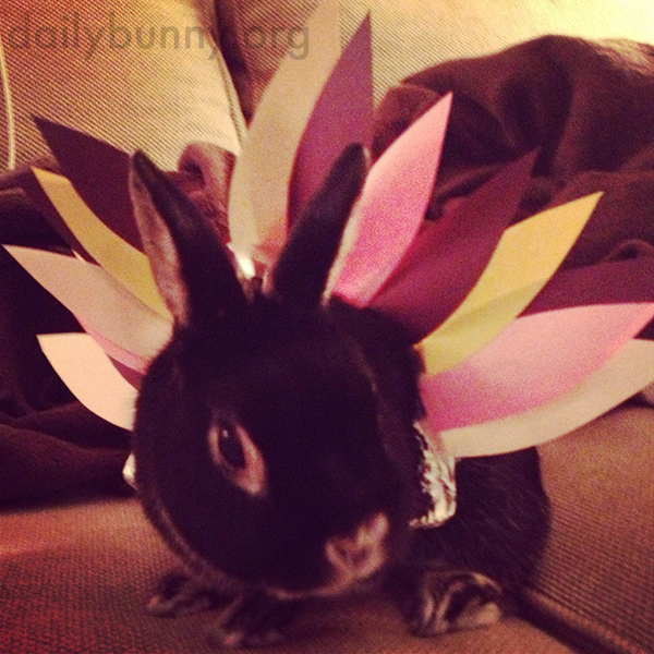 Bunny Dresses Up as a Turkey for Thanksgiving