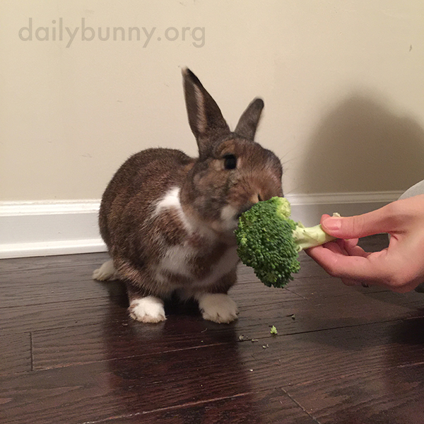 Bunny Enjoys Some Homegrown Veg 1