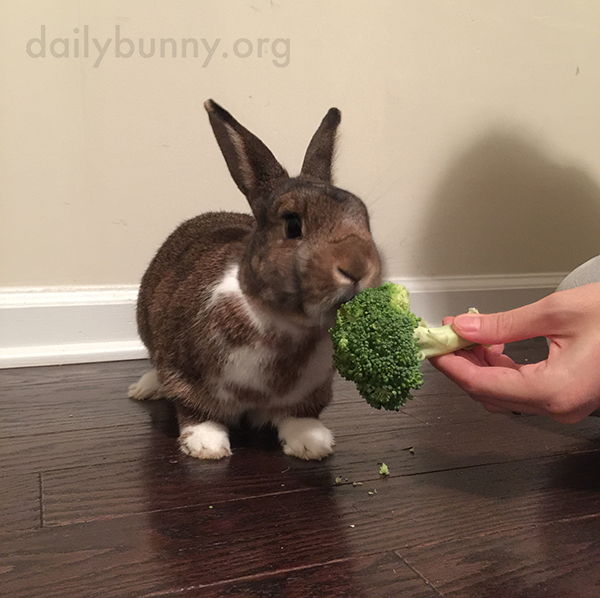 Bunny Enjoys Some Homegrown Veg 2