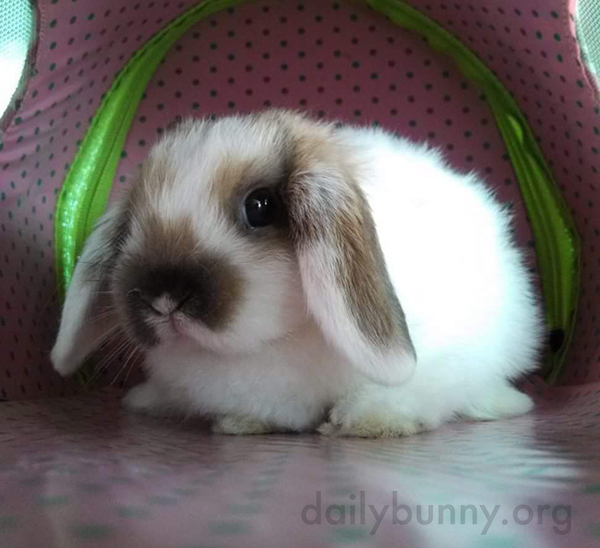 Bunny Hunkers Down in His Tent
