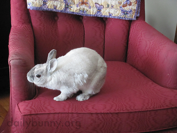 Bunny Makes Sure the Chair Meets Her Requirements
