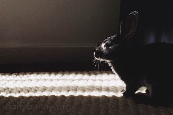 Bunny Sits Just Outside a Sunbeam