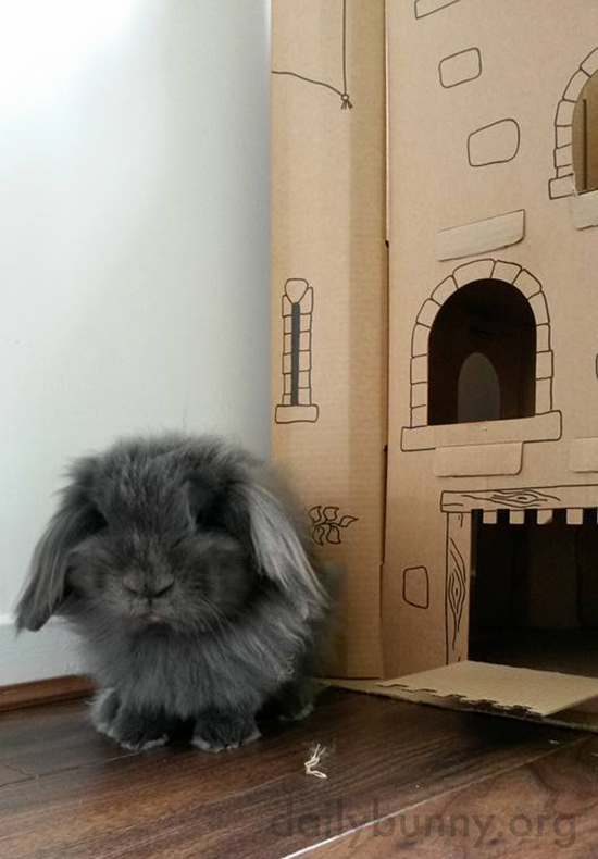 Bunny Stands Guard at His Castle's Entrance