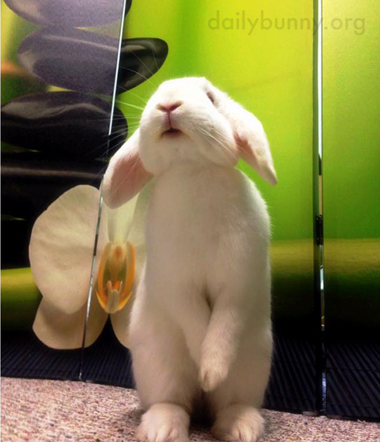Bunny Stands Up Very Modestly