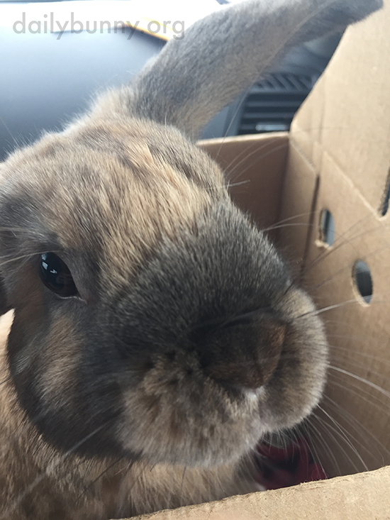 Bunny Stands Up in His Carrier