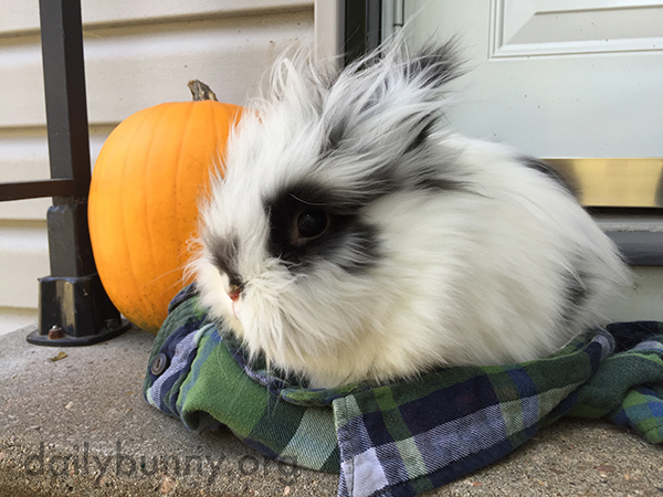 Bunny and His Pumpkin Enjoy the Brisk Fall Air