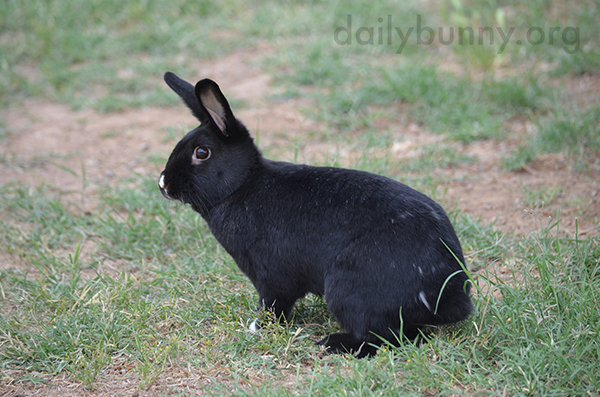 Bunny's Coat Is Dappled with White