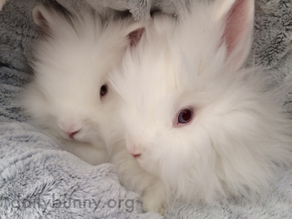 Fluffy Bunnies Are Two Peas in a Pod