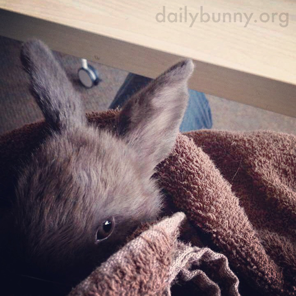I Am Cozy in Here, Human, Don't Disturb Me