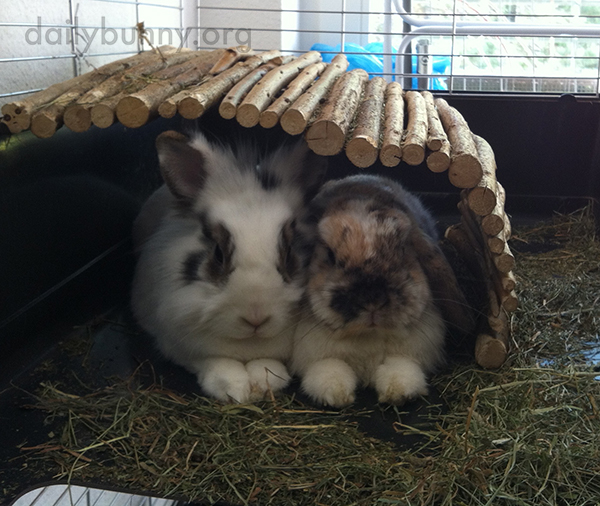 Bunnies Hunker Down Together Under Their Log Dome