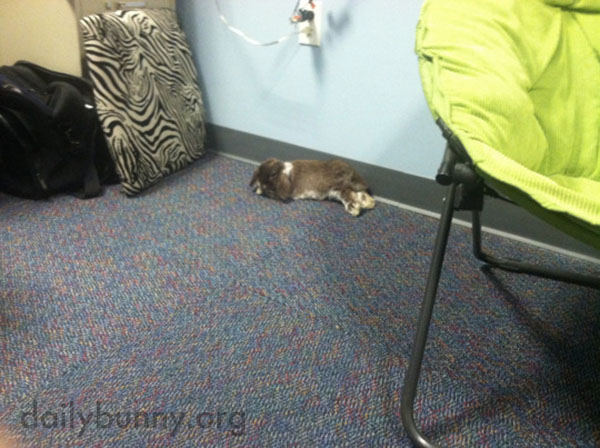 Bunny Finds a Nice Spot for a Nap at Work