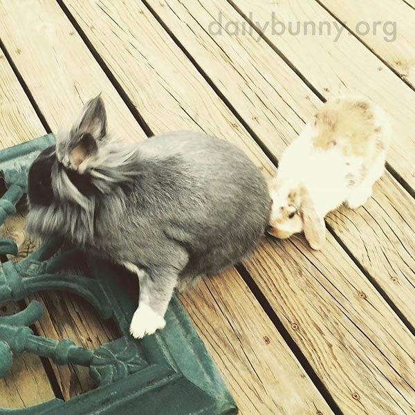 Bunny Helps Hoist Her Friend Up