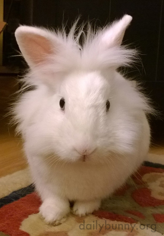 Bunny Looks Coyly at the Camera