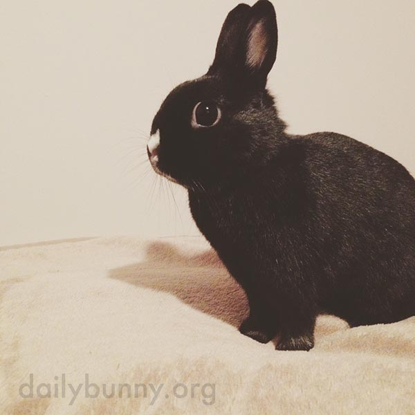 Bunny Suddenly Remembers There Are Fresh Carrots in the Crisper