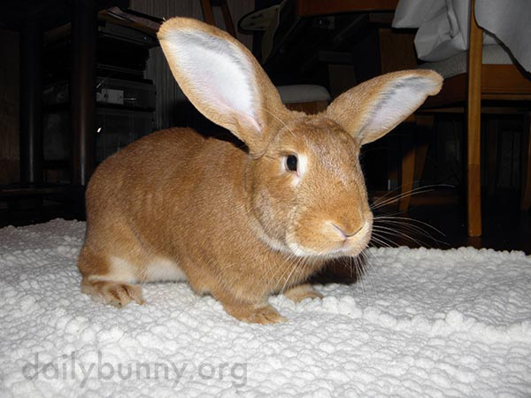Bunny's Rug Is Has a Special Texture for Optimum Traction