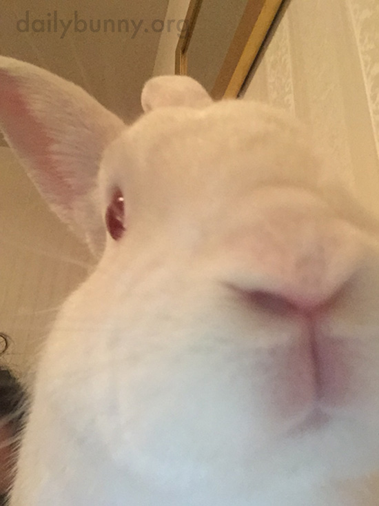 Bunny's Still Learning the Selfie Ropes