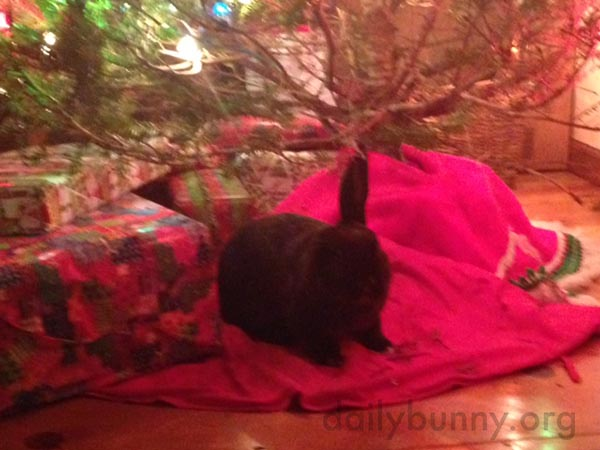 It's the Daily Bunny's Christmas 2015 Mega-Post! 10