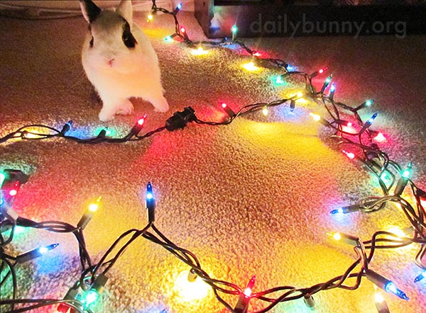It's the Daily Bunny's Christmas 2015 Mega-Post! 2