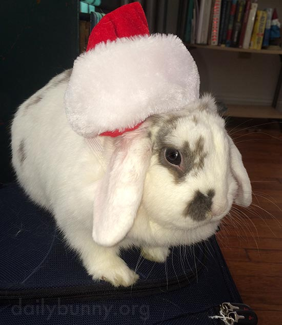 It's the Daily Bunny's Christmas 2015 Mega-Post! 3