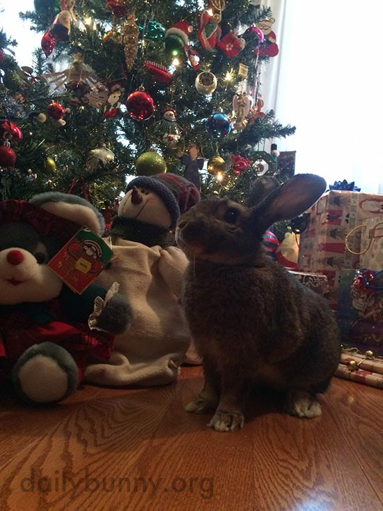 It's the Daily Bunny's Christmas 2015 Mega-Post! 5