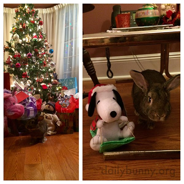 It's the Daily Bunny's Christmas 2015 Mega-Post! 6