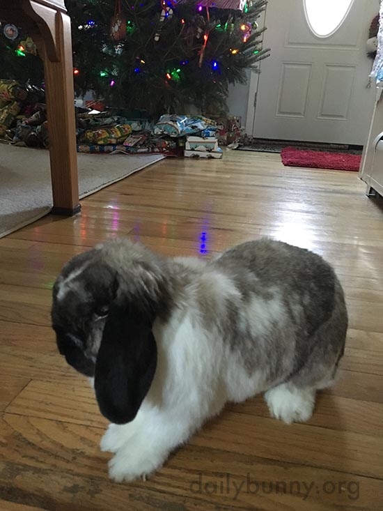 It's the Daily Bunny's Christmas 2015 Mega-Post! 8