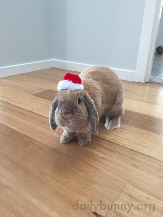 It's the Daily Bunny's Christmas 2015 Mega-Post! 9