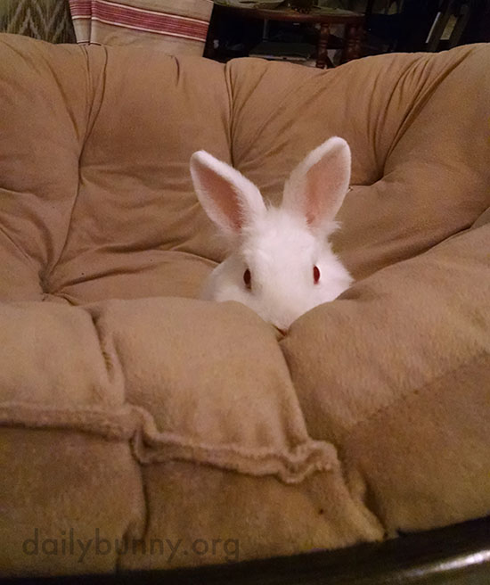 Little Bunny Has Claimed the Big Soft Chair 2