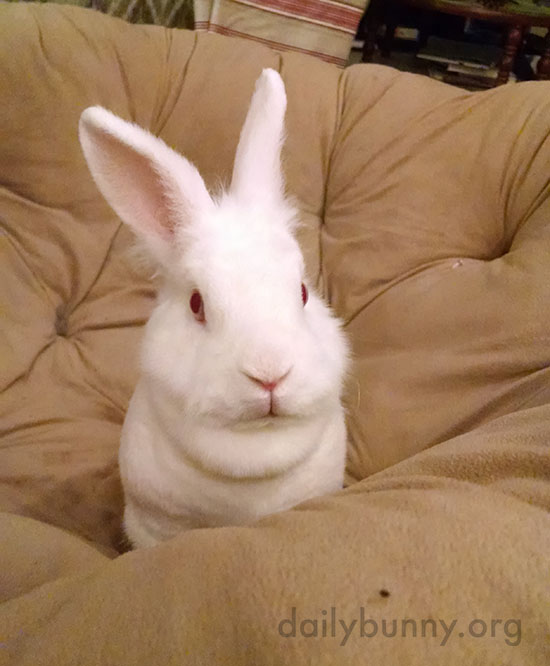 Little Bunny Has Claimed the Big Soft Chair 3