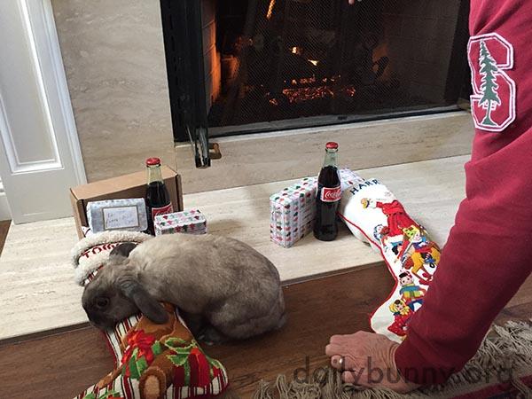 More Christmas Bunnies! 4