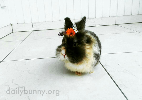 Tiny Bunny Wears a Tiny Flower Crown