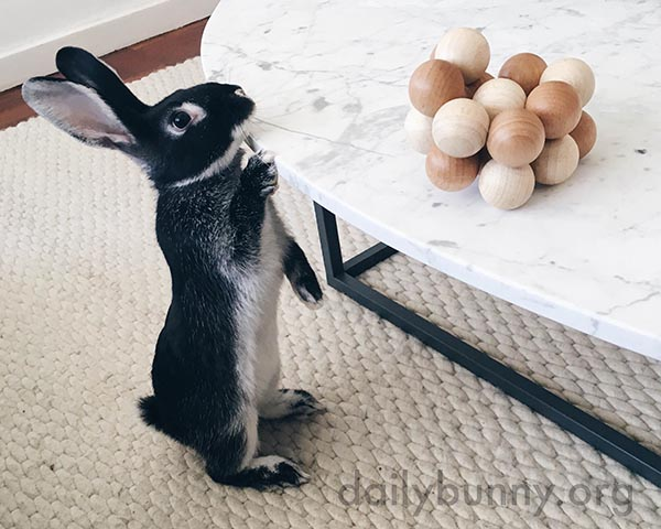 What Are Those Things, Human? Are They Edible?
