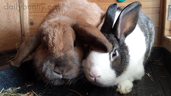 Bunnies Look Intrigued by the Possibility of Treats