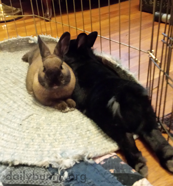 Bunnies Relax in Different Directions