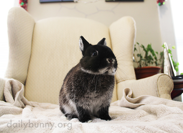 Bunny Bounces Back Up After Being Petted 2