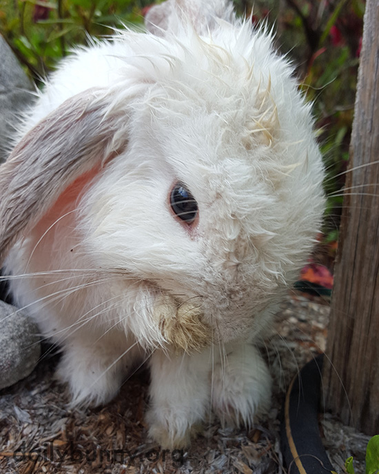 Bunny Cleans Up After a Romp Through the Sprinkler