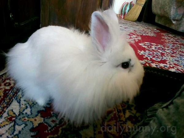Bunny Gets Cozy on a Comfy Rug