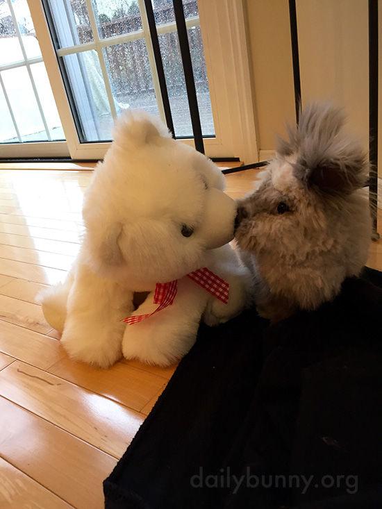 Bunny Gets a Nice Smooch from His Bear Friend