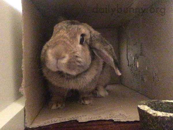 Bunny Has Been Working on Making a Window in Her Cardboard Box