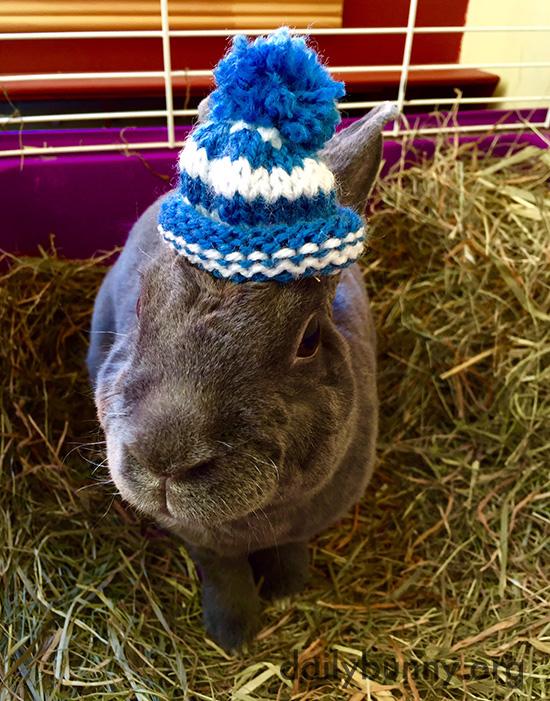 Bunny Has a Tiny Pom Pom Beanie