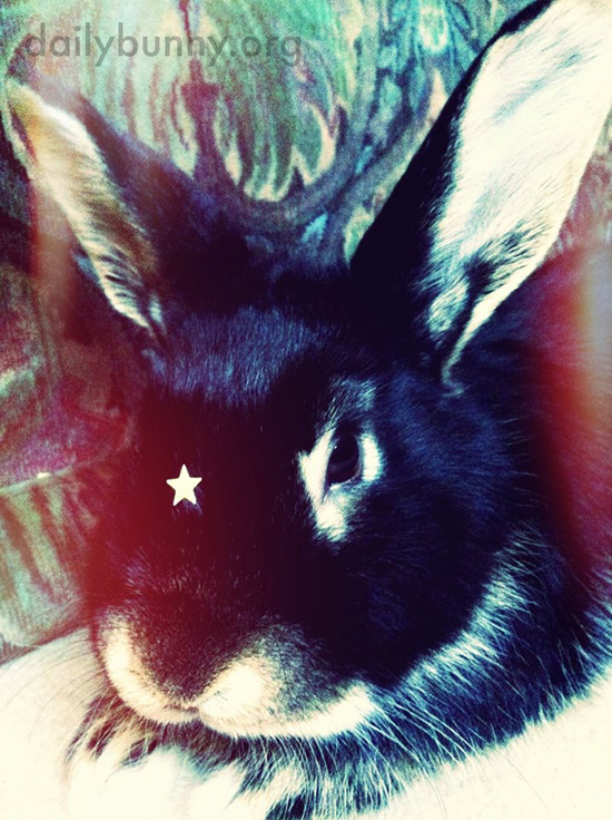 Bunny Is a Star