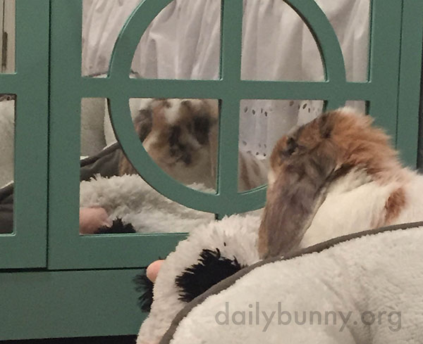 Bunny Notices Herself in the Mirror 2